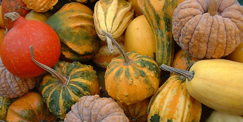 Courge-blog